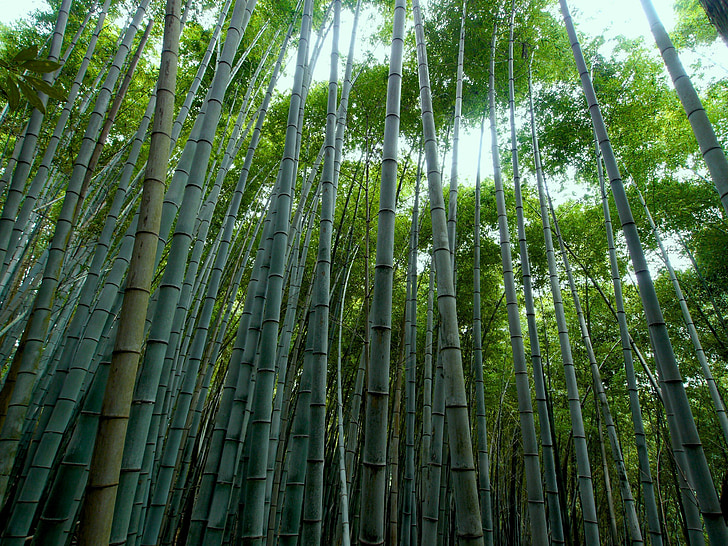 Chinese bamboo trees grow after 5 years and how this is similar to successful businesses